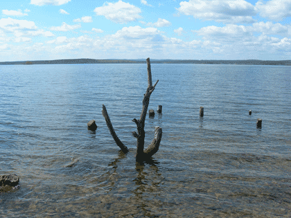 Живописная коряга (25.04.2017) - Озеро Сугояк